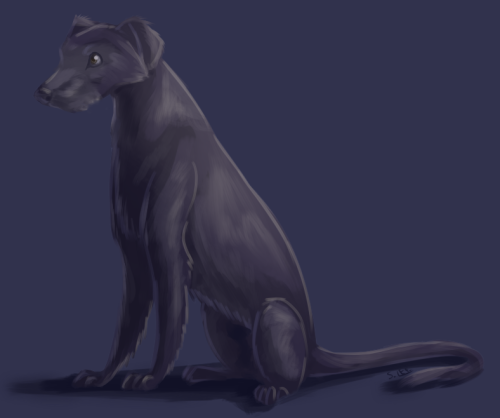 A wolfhound request from TDF. This is like the first speedpaint I've done that has actually been completed in a speedy manner. I'm so proud.