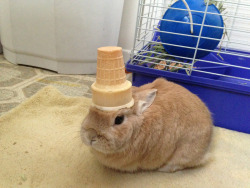 stuffonmyrabbit:  Ice cream cone