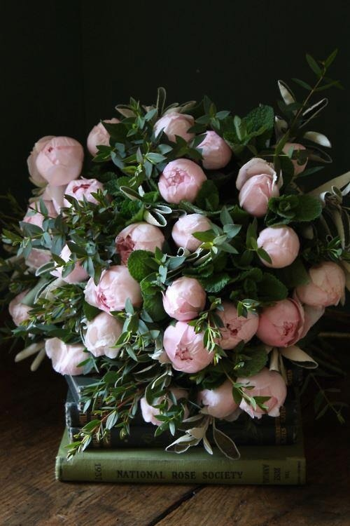 honeysucculents:  peonies