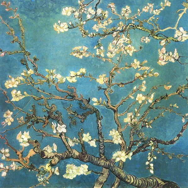 "kasheva:  Vincent van Gogh""Almond Branches in Bloom""1890"
