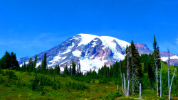 Mount Rainier - Washington State submitted by: justonething87, thanks!