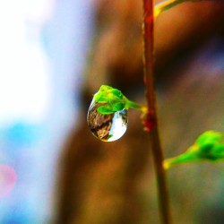今日は雨。 #water #drop #waterdrop #raindrop #Rain #雨 #水滴 #雫萌え部 #雫 #露 #葉 #grass #leaf #leaves #plants #植物 #nature #自然 #photooftheday #iPhoneography #webstagram #closeup #irox_macro #macrophotography #macro #マクロ #instamacro #ig_macro
