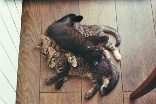oursoulsareone:  untitled by mirrors in the street on Flickr.  kitten pile!
