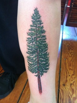 fuckyeahtattoos:  Douglas fir done by Lewis Hess at Atlas Tattoo in Portland, OR.