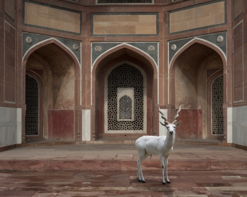 thegiftsoflife:  The Witness, Humayun's Tomb, Delhi by Karen Knorr http://www.karenknorr.com/wp-content/uploads//The-Witness-Humayuns-Tomb-Delhi.jpg