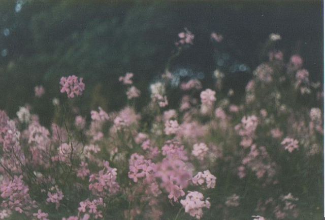 mykindafairytalee:  Flowers by TiepoloCeiling on Flickr.