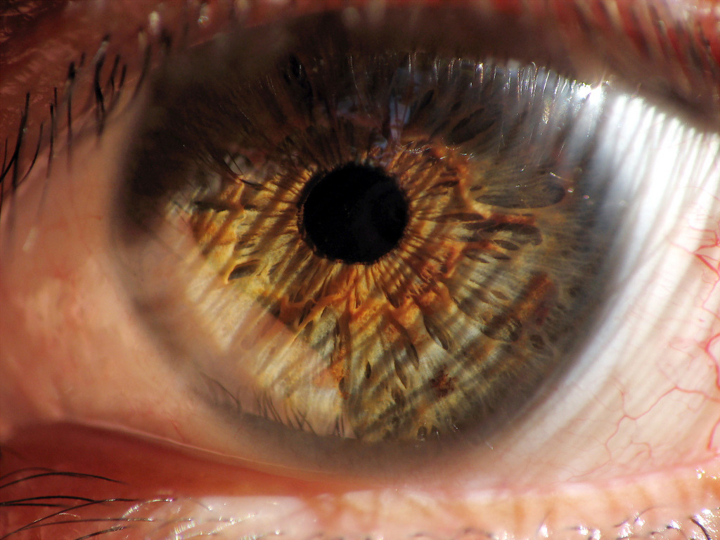 brutalgeneration:  Mi ojo (by lalowilson)