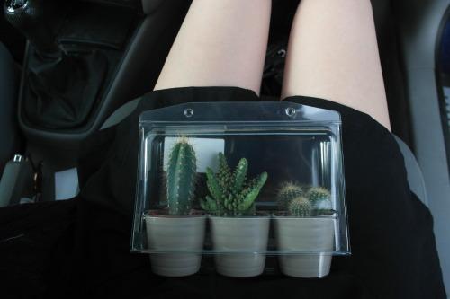 Kaktus Tumblr