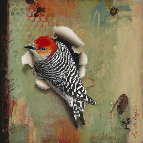 Red-bellied woodpecker from Camille Engel's Trespasser series