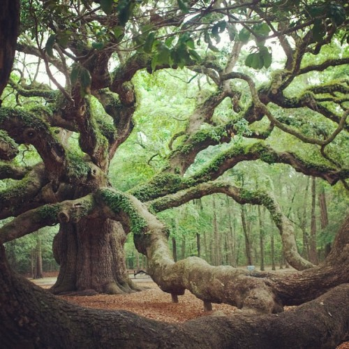 redickulousdave:  I wanna live in this tree for the rest of my life, completely naked and free from the world we know…