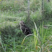 Mammie, a resident feral cat at Soul Sanctuary Soul Santuary in western NY needs your help in funding new fencing and buildings for their resident feral cats. This will allow them to take in more cats. Please visit their website at www.feralsoul.com to donate.