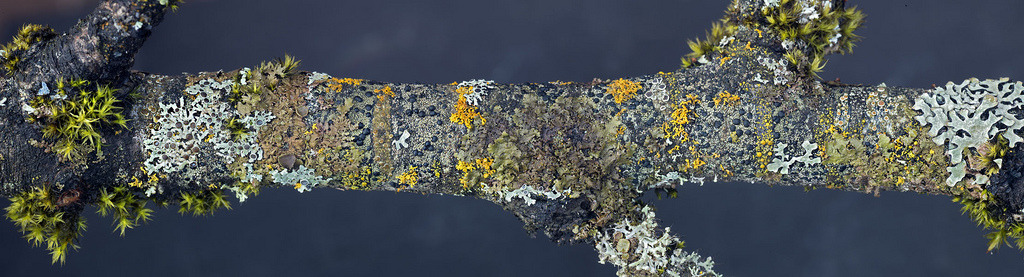 at least 15 lichen species (by wanderflechten)