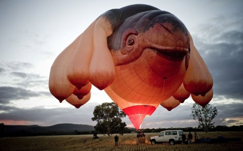 #WTF of the Day  The Skywhale hot air balloon, a sculpture by internationally renowned artist Patricia Piccinini, is flown near Mt Arapiles in the southern Australian state of Victoria Picture: Mark Chew/AFP/Getty Images/Fairfax Media