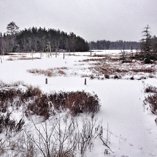 Beach Meadows Lake #queenscounty #novascotia #hiking #hikingtrails #instahub #igerscanada #treeporn #iphonegraphy  (at Queens County Rails To Trails)