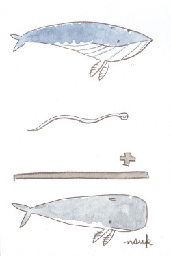 a whale plus a sperm makes a sperm whale