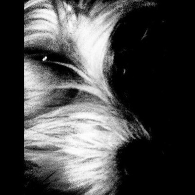 #dog #morkie #sad #black #white