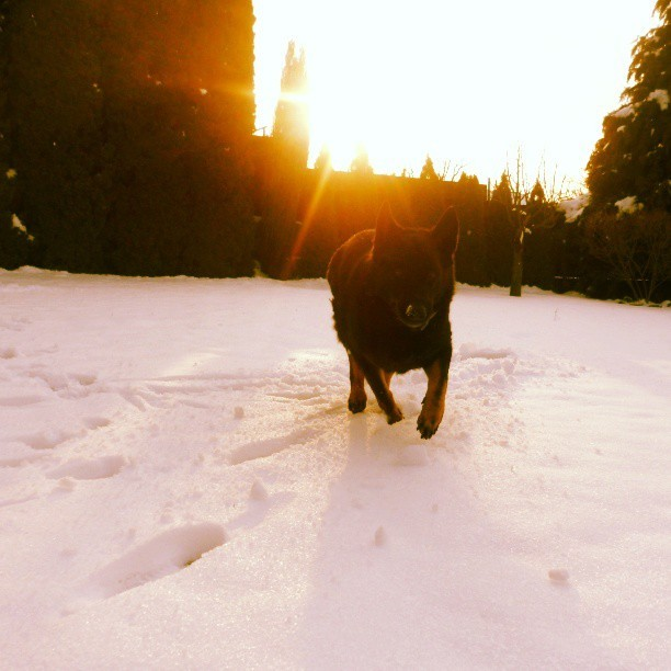 I'm coming! #dog #cute #animal #snow #sun #instaphoto #instamood #instapic #instagood #instaanimal #photooftheday