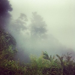 #trinidad #tropical #mountain #mist. #jj #ig #nature #igers