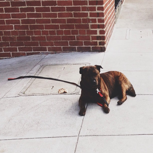 #pup #puppy #dog #doggy #sf #brick #streetphotography #street #sidewalk #sunny #sun #sgig #spring #sanfran #webstagram #rustic #outdoor #pattern #picoftheday #art #all_shots #americanmade #fromwhereistand #hashtag #life #love #lifestyle #city #clean #classic #currently  stray pup soaking the sun  (at Flixster HQ)