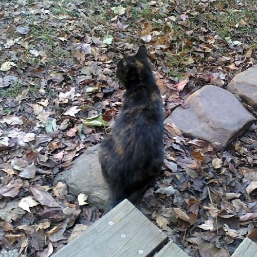 This was taken the fall of #2010 Little stray #cat at my Uncles house. #catstagram #instacat #meowstagram #instameow #petstagram #instapet #gato #neko #catmancing #catsofinstagram #caturday #instagram #instagramhub #instagood #instamood #instacool #instadaily #igdaily #photography #digitalphotography #photooftheday #nofilter #goodafternoon