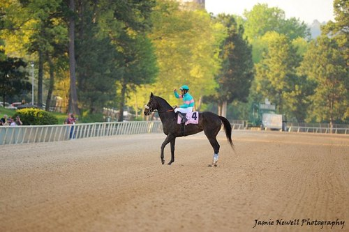 thehorsegodbuilt:  Zenyatta with Mike Smith aboard.