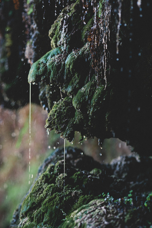vacants:  Dripping with Bling (by jasfitz)