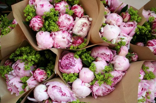 just-add-honey:  Lovely Peonies.