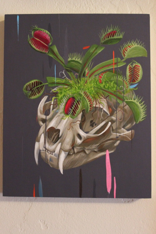 scientificillustration:  bobcat skull and flytraps.   Thanks for the submission Frank! http://frankgonzales.net/home.html