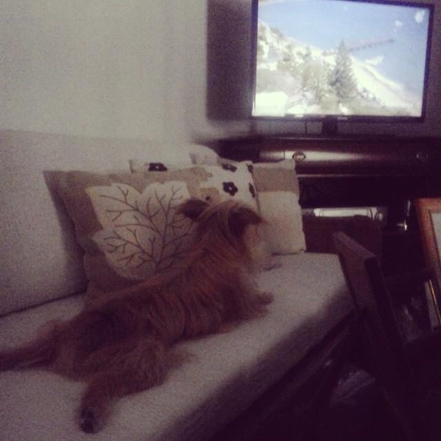 Aquí estamos, viendo la tele.  #Dog #Cocó #Relax #Cute