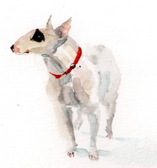 I saw this Bull terrier in a coffee shop. He had a cool eyepatch. He wanted everyone's food.