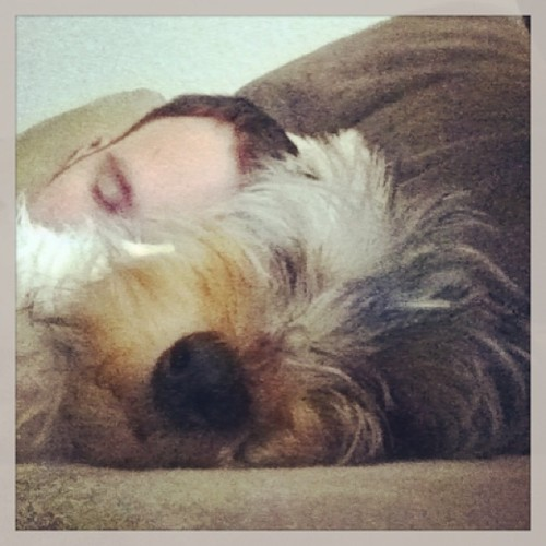 #Hurricane & I decided to take a #Sunday afternoon #nap. #Yorkie #Nation #Puppies #Dogs #Sleep (at Lost Creek Resort at Lakewood Ranch)