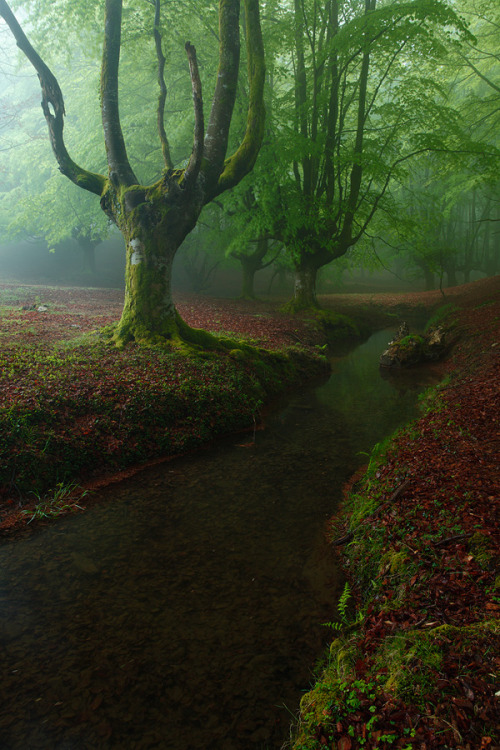 creepypurpleelves:  Spring Light by Juan Pavon