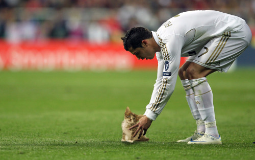 sportballsreplacedwithcats:  Sweet kitten purrs at Ronaldo's firm touch.