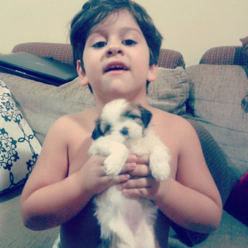 Obrigado papai pelo novo membro da família #dog #love #night #happy #friends #brother #wonderful #animal #house #swag