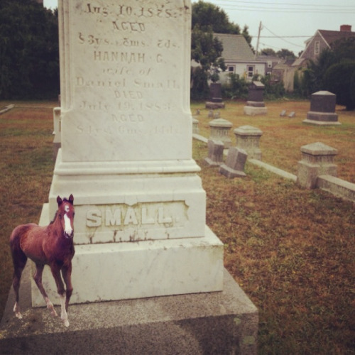 This tiny horse signed up for Ancestry.com and found a distant relative.