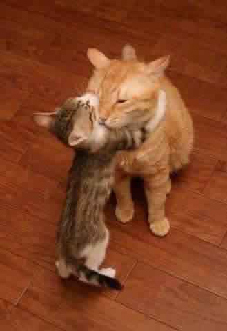 Awwww….. So sweet!