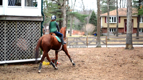 Shutterbug (aka Lyric) my six year old OTTB thoroughbred mare. Seven months off the track!