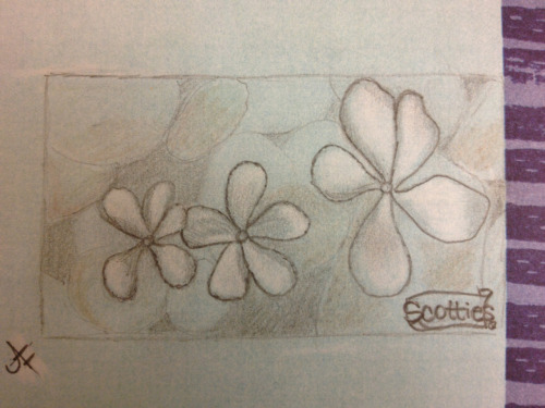 Sketch of a Scotties box design