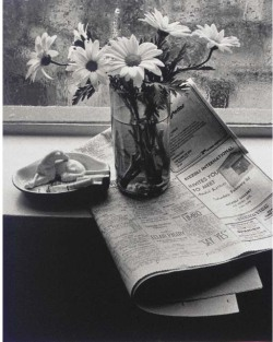 poboh:  Still lifes, New York, Andre krtesz.