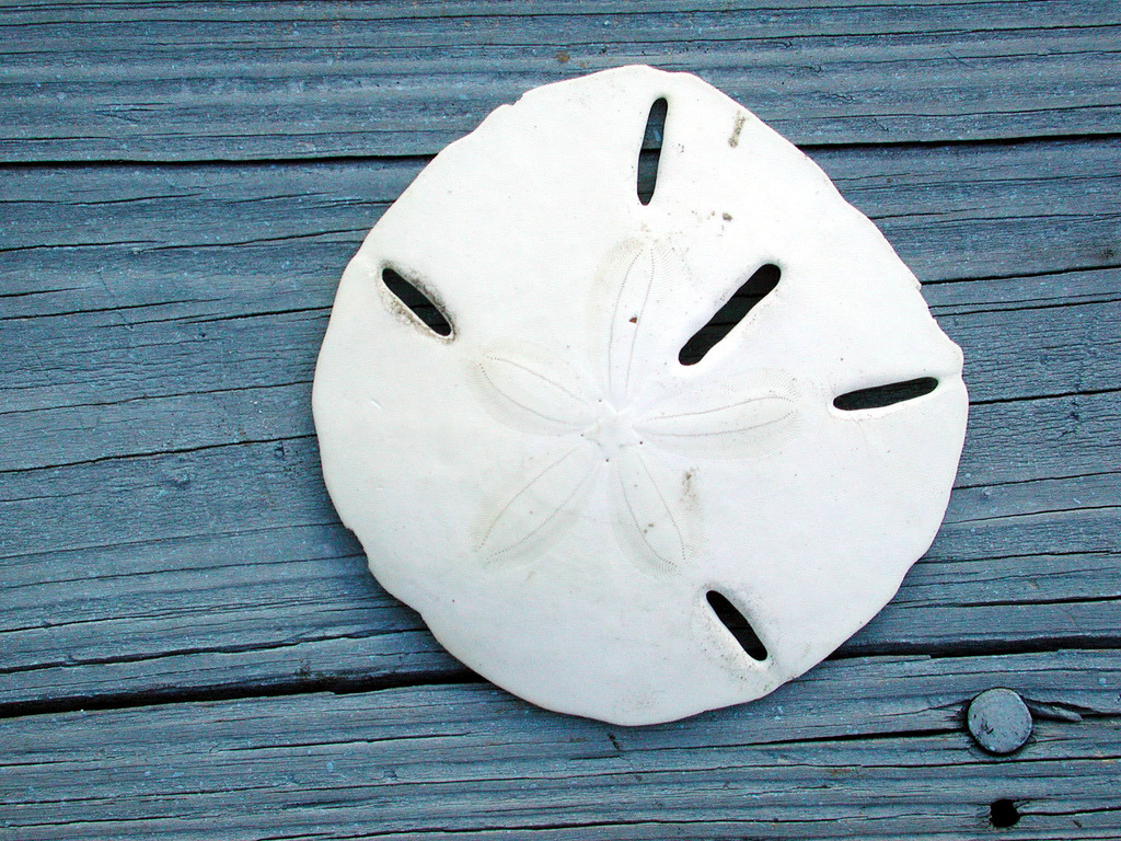 diag0nally:  Sand Dollar (by Editor B)