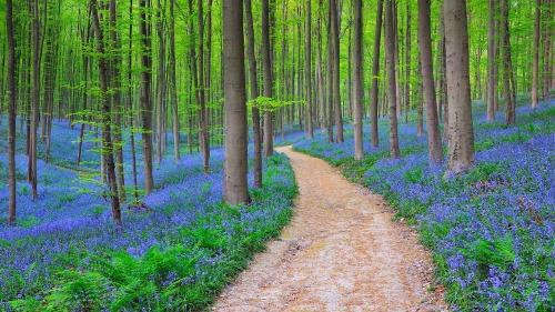 Halle Forest, Halle, Belgium