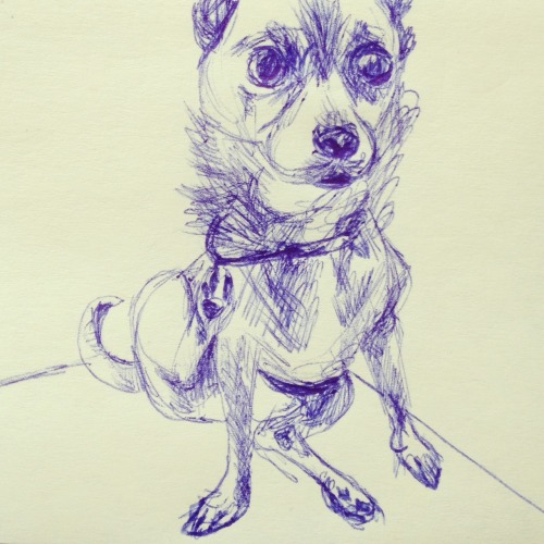 postitoodles:  Just a dog with his paw stuck in his collar.