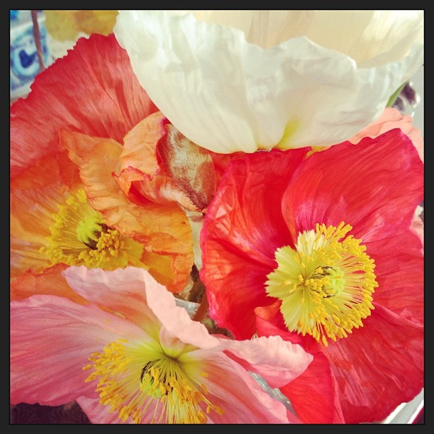 #flowers #spring #summer #red #pink #orange #white #colors #happy #floral #yellow