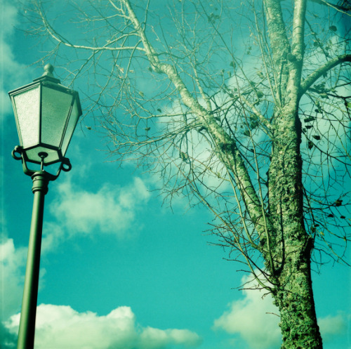 lomographicsociety:  Lomography in Colors - Shamrock