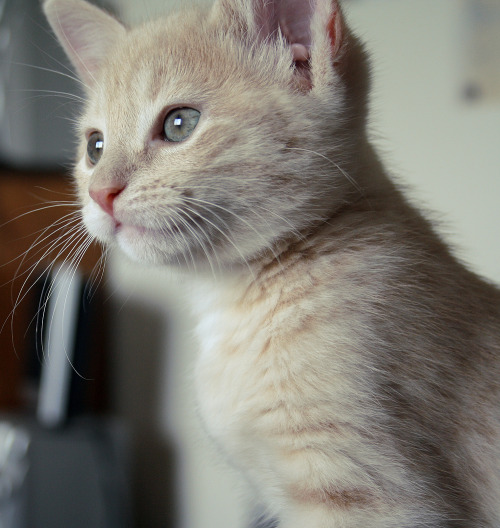my gorgeous baby Elijah when he was a kitten.