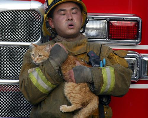 Cat-astrophes: Cats rescued from disasters