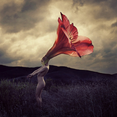 laniferous-e:  i-love-you-deerly:  thorns that flowers grow by brookeshaden on Flickr.