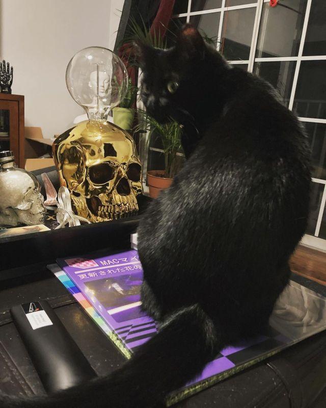 Spooky Cat #cat #blackcat #spooky #spoopy #gothic #gothichomemaking #gothichomedecor #gothichome  https://www.instagram.com/p/CT8cRohFzkD/?utm_medium=tumblr #cat#blackcat#spooky#spoopy#gothic#gothichomemaking#gothichomedecor#gothichome
