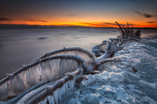 wnycradiolab:  Frozen trees on the shores of Lake Ontario.  Mind-blowing photos by Timothy Corbin, via Colossal.