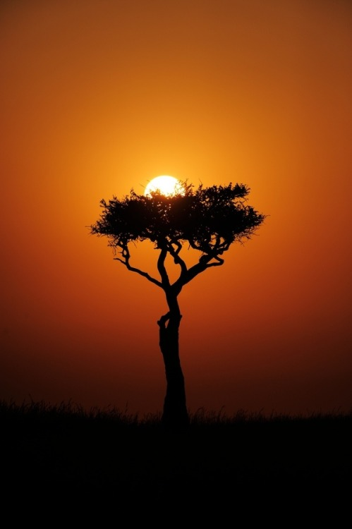 unwrittennature:  Mara sunrise, a nest for the Sun. By: Russ Valentine
